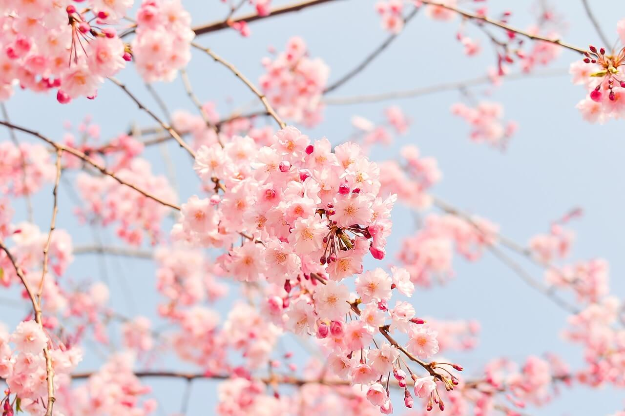 春はフォトジェニックがいっぱい!インスタグラムキャンペーン事例~2016spring~