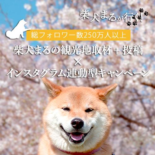 柴犬まるとこらぼキャンペーン【CAMPiN×柴犬まる】