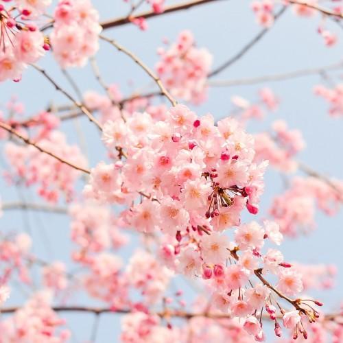 インスタグラムの春キャンペーン事例まとめ【2016年版】