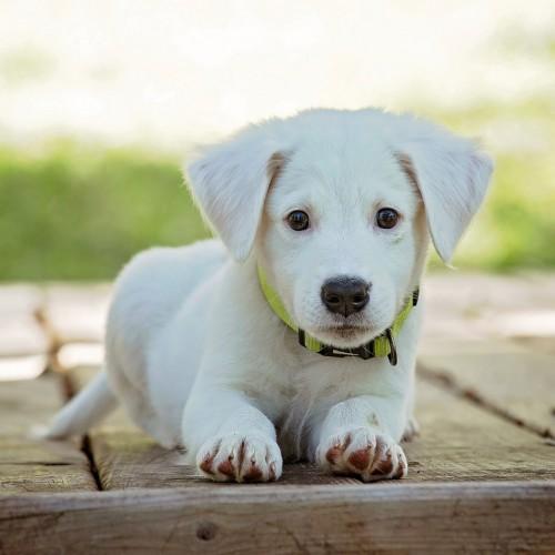 愛犬のインスタ映え撮影方法!ペットをインスタグラムで人気にさせるには?