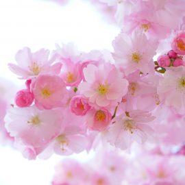 インスタグラムお花見キャンペーン事例をご紹介!