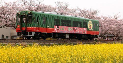 真岡線お花見列車
